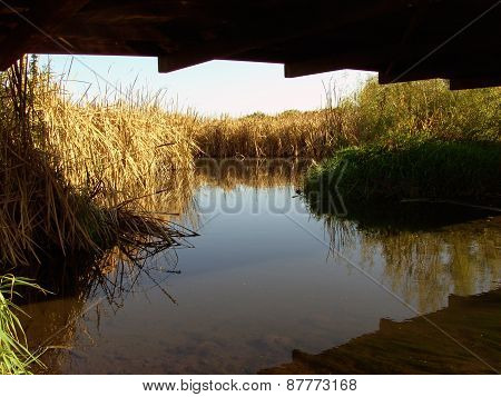 View of a Creek from Under a Bridge