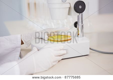 Scientist looking at petri dish with microscope in laboratory