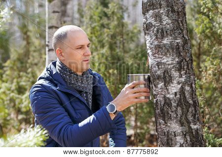Man in woods collecting birch sap