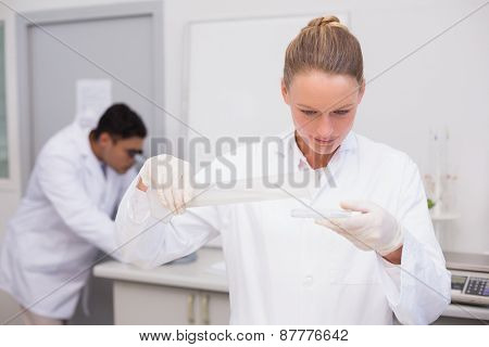 Serious scientist filling a petri dish in the laboratory