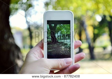 Taking picture of autumn nature
