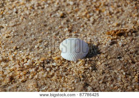 Close up seashell