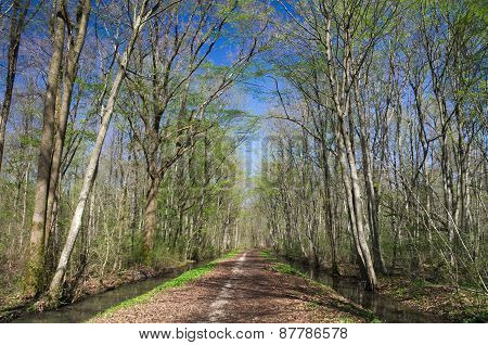 Deciduous plain wood in early spring