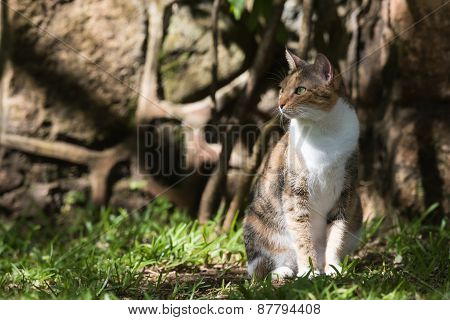 Tri Colored House Cat Sitting In Dappled Light