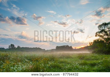 Blooming meadow grass in the mist at dawn