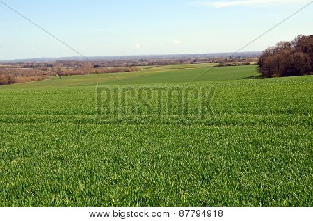Crop fields in Sussex England during Spring.
