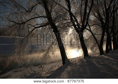 Frost on the trees on the embankment of the Iset River in Yekaterinburg, Russia.