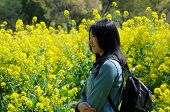 picture of rape-seed  - A chinese woman standing in a field of blooming yellow rape seed  - JPG