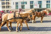 image of saddle-horse  - several light brown horse ride through the street with saddle and coach - JPG