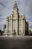 pic of liver  - LIVERPOOL UK MAY 6 2012 - JPG