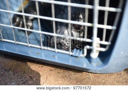 VALAAM ISLAND, RUSSIA - JULY 29, 2015: Ladoga ringed seal in a cage. Animal was cured in the Center of study and conservation of marine mammals and released into the lake Ladoga