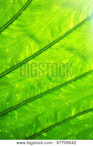 Green Leave Texture