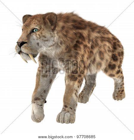 Big Cat Smilodon