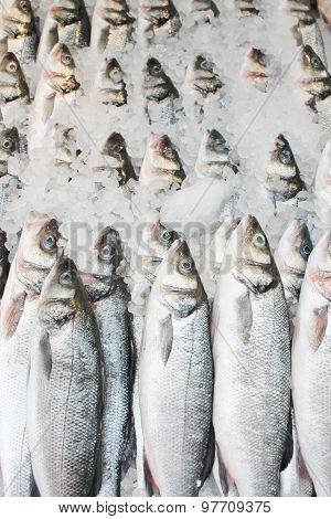 Fish at fishmongers sea bass