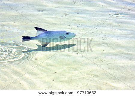 Fish Isla Contoy Mexico Foam The  Wave