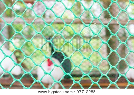 Closeup Green Cage Of White Roosters In Daytime,