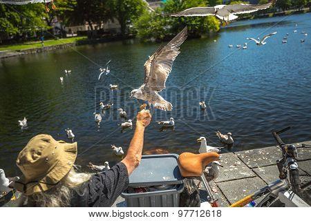 Homeless feeding seagulls