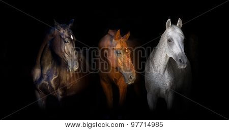 Three horse on black