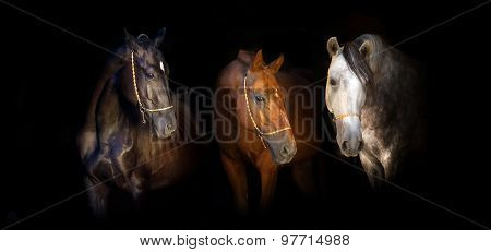 Three horses on black