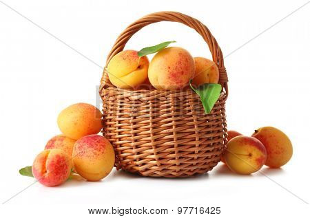 Ripe apricots in wicker basket isolated on white