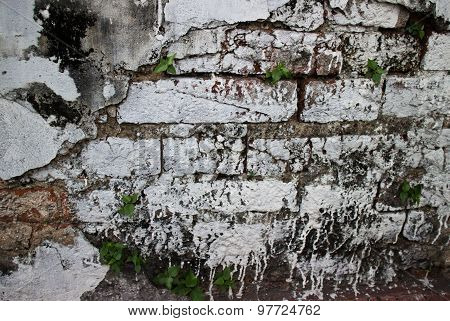 Broken Stucco Wall With Whitewashed Exposed Brick Texture And Vegetation