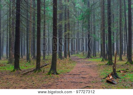 The Path In The Autumn Coniferous Forest Empty