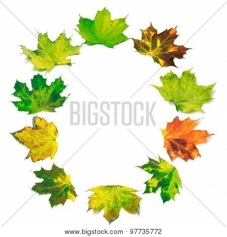 Letter O Composed Of Multicolor Maple Leafs