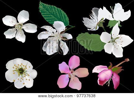 illustration with spring trees flowers isolated on black background
