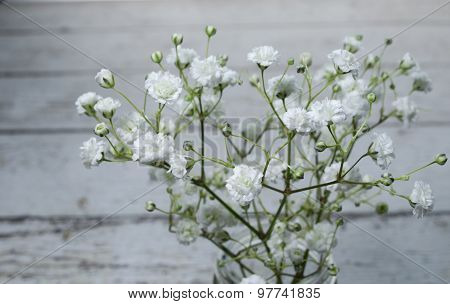 Delicate Baby's Breath Flowers