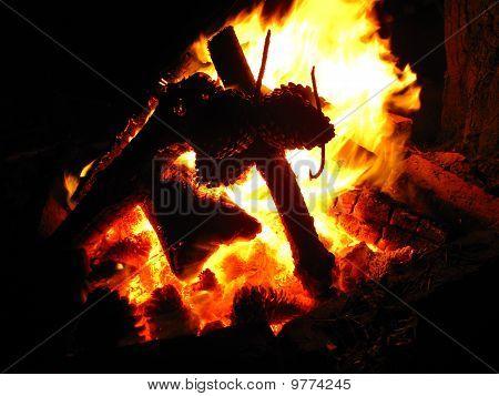 A pine bonfire