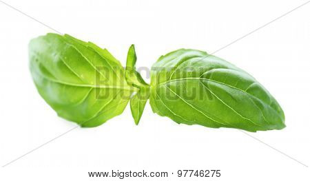 Green fresh basil isolated in white