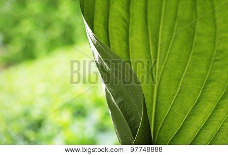 Fresh green leaf close-up