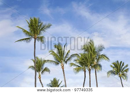Palms Natural Background