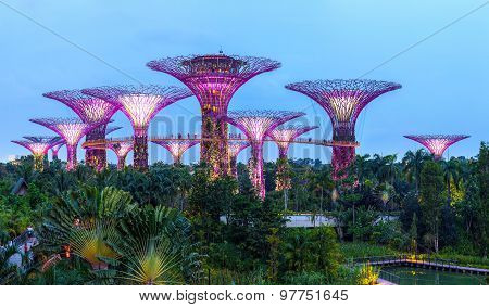 Supertree Grove gardens. Singapore city.