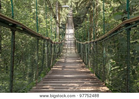 Rope walkway through the treetops in a rain forest.