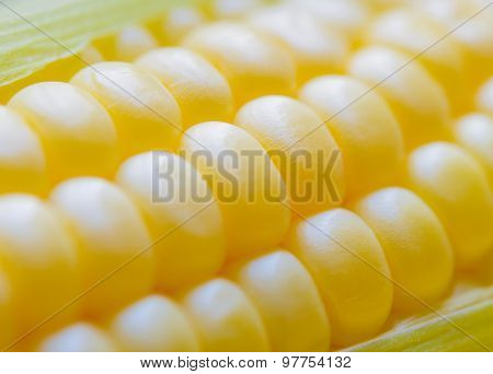 Closeup of Fresh Sweet Ripe Corn Seeds. Soft focus.
