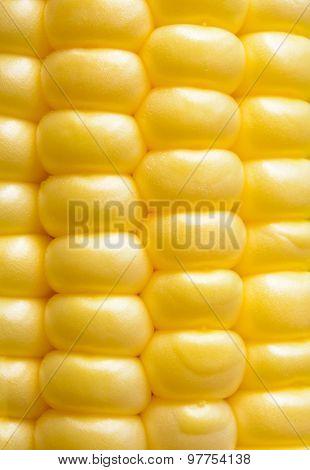 Closeup of Fresh Sweet Ripe Corn Seeds. Harvesting Background