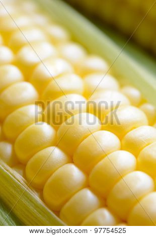 Fresh Sweet Ripe Corn Cobs with Green Leaves. Soft focus.