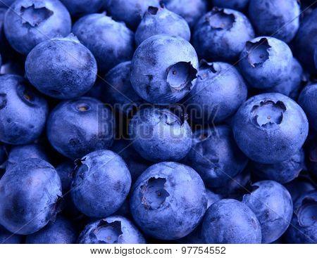 Background Full of Fresh Ripe Sweet Blueberries. Summer Berries, Harvesting Concept