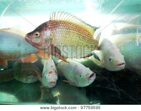 Seafood in fish tank