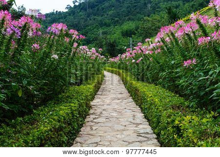 Footpath In The Garden With Beautiful Flower