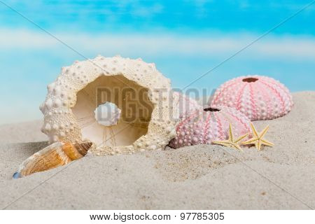 Sea urchin, seashells and starfish on a sandy beach