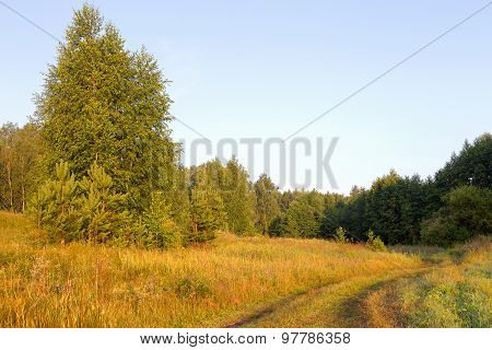 Beautiful Morning Landscape In The Forest Road, Forest Glade Flooded With Bright Sunlight.