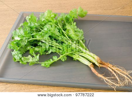 Chinese Parsley Or Coriander On Grey Tray