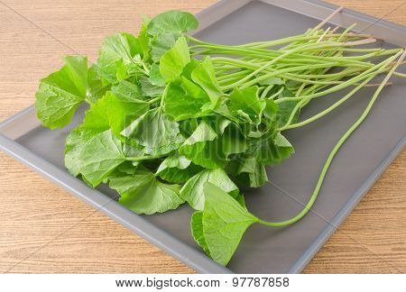 Gotu Kola Or Centella Asiatica Plant On Tray