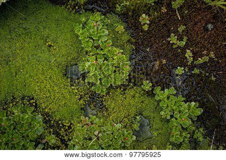 Marsh Flowers And Moss