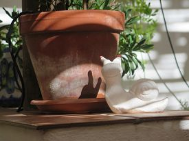 pic of hermaphrodite  - White plaster snail with shadow on terracotta flowerpot - JPG