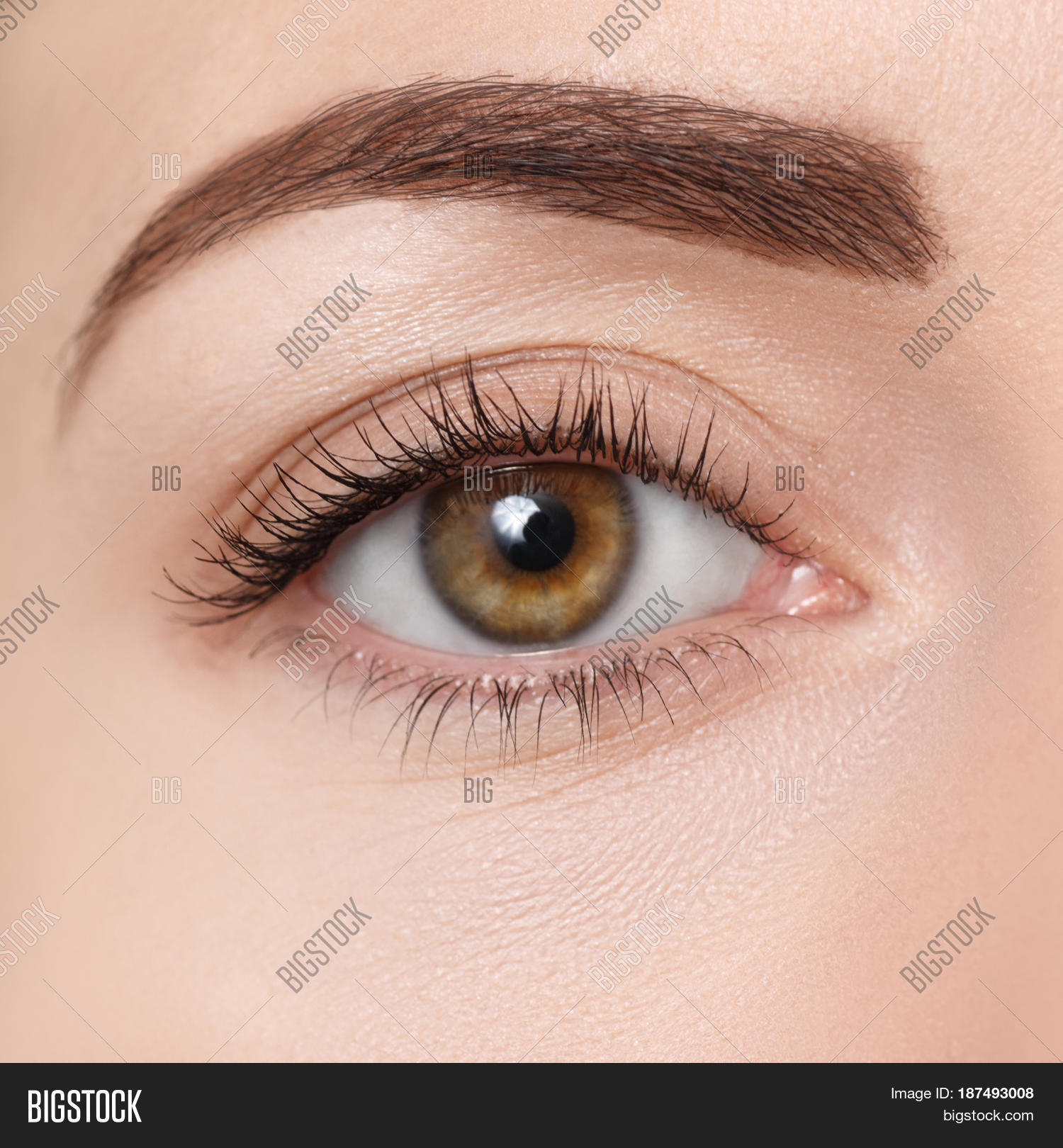Closeup Brown Eye Beautiful Macro Image Amp Photo Bigstock