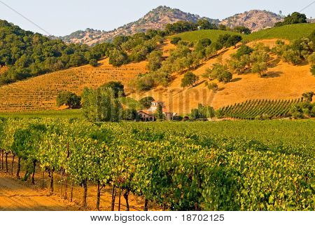 Napa Valley vineyard in California at sunset