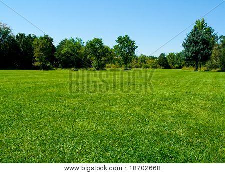 Grass landscape